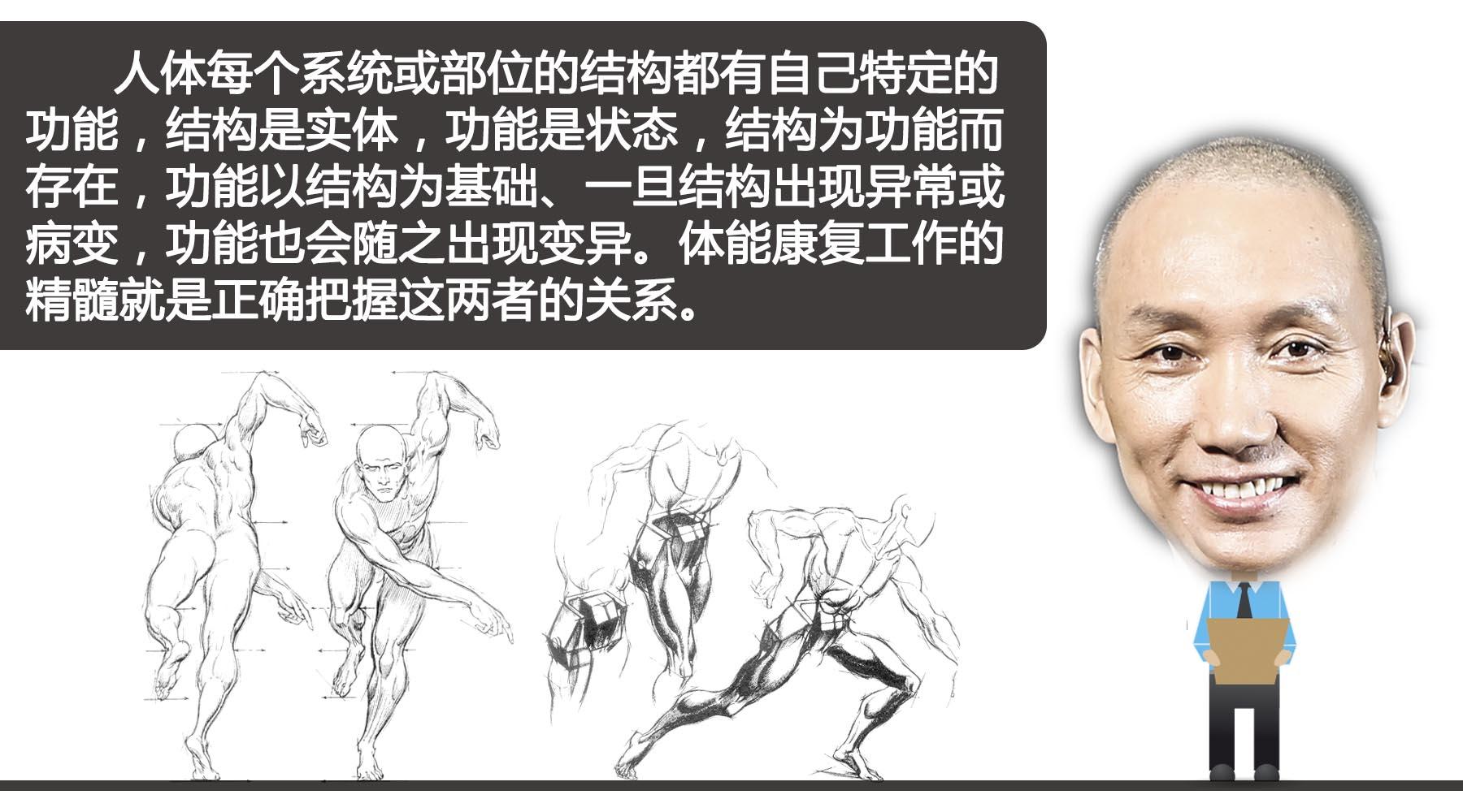 左肩骨头结构图